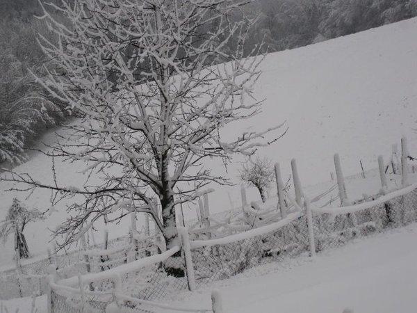 Zasnežena pokrajina pri Ormožu
