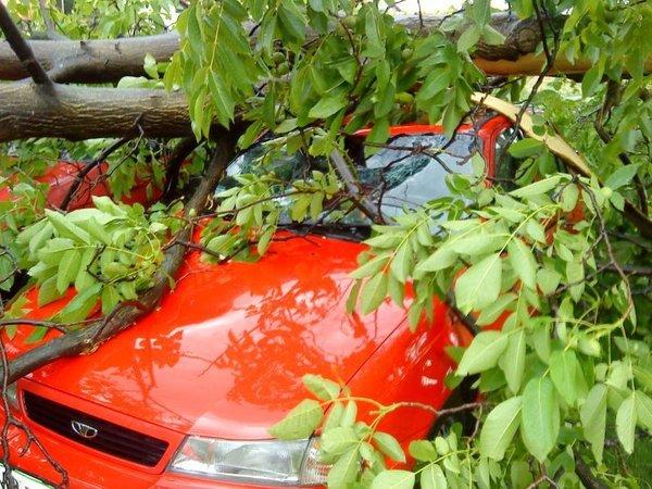 Drevo padlo na avto-1