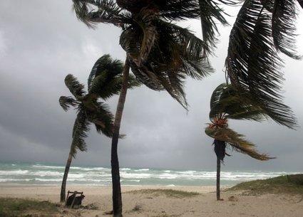 Palme v vetru