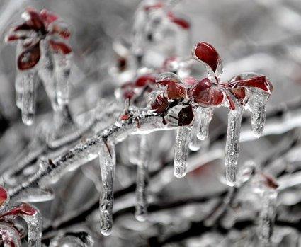 Ledeni oklep na vejah