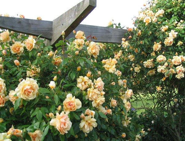 Vrtna pergola za vroče dni