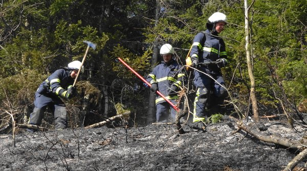 Gasilci so pogasili okoli šest hektarjev travne površine.